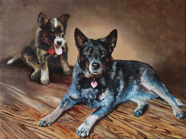Blue Heeler Australian Dog from Canada