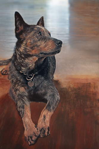 portrait of Blue Heeler Dog