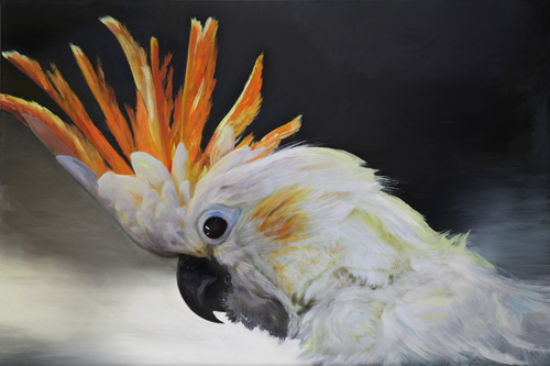 Calika Cockatoo